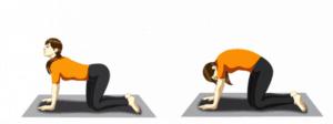 postura del gato- yoga