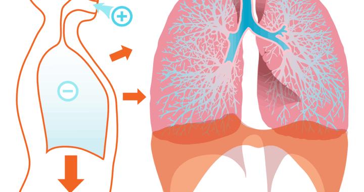 pulmones - inspiración