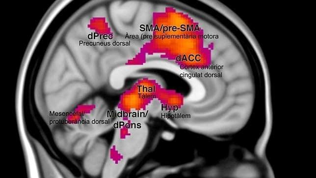 zonas activadas por el miedo en el cerebro