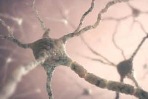 neuronas siguen creciendo en la edad adulta